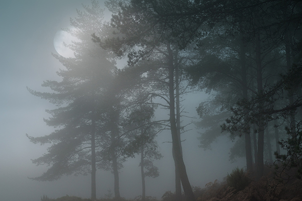 Warum ein Wald auch in der Nacht nicht unheimlich ist