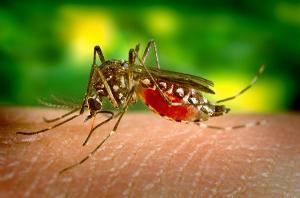 Gesund reisen - Achte auf den Mückenschutz!