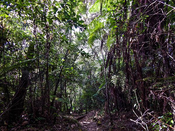 Sierra Maestra - Anstieg zum Pico Joaquín