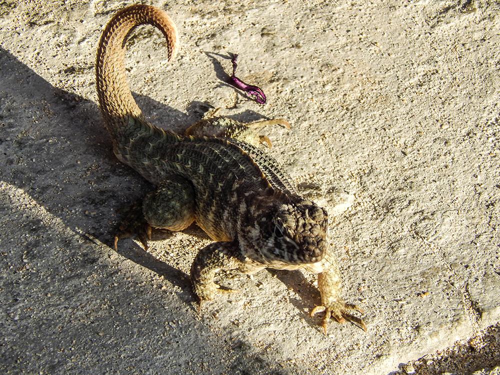 Kuba Fauna
