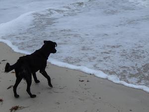 Tollwut Reisegesundheit - Streunende Hunde