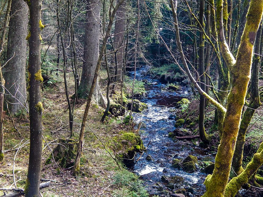 Wandern im Harz - Am Goethe-Stieg