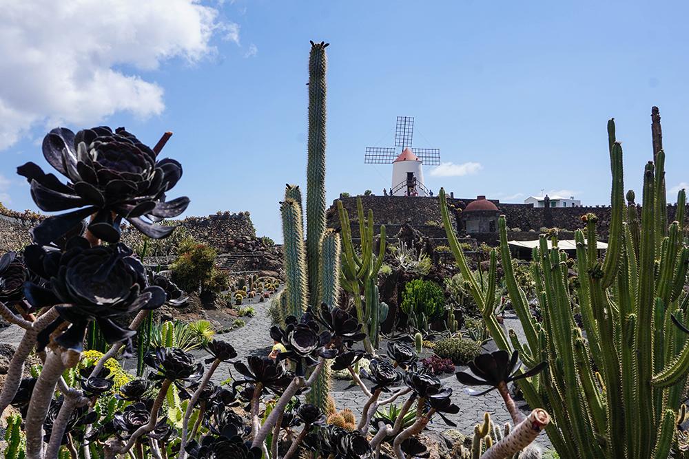 Lanzarote - Kaktusgarten - Nordtour - 01