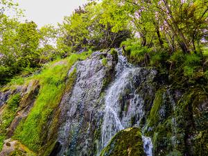 Wasserfall Königshütte (Hüttenfall)