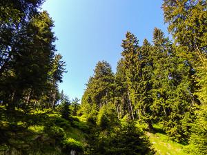 Wild campen Foto02