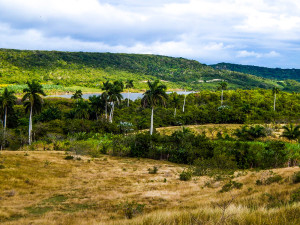 Kuba Rundreise - Jibacoa - Dschungel und Natur
