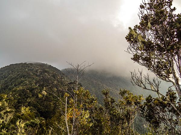 SIerra Maestra - Pico Turquíno von Nebel umhüllt