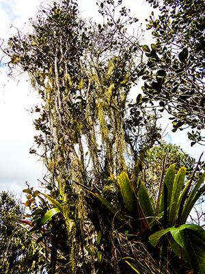 Sierra Maestra - Interessante Flora und Fauna