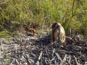Reiseguide Kuba - Fauna 03