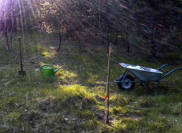 Earth Day 2015 - Baum pflanzen