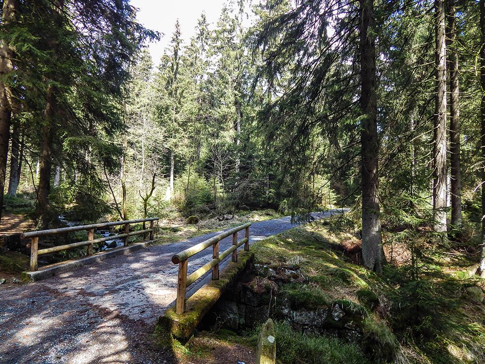 Wandern im Harz - Die Moosbrücke