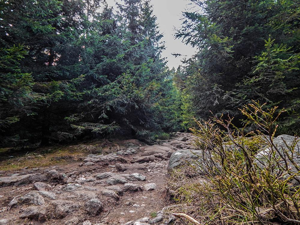 Wandern im Harz - Der Eckerlochstieg