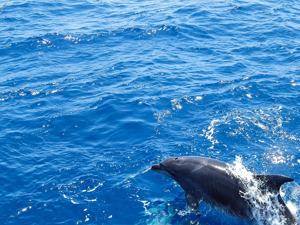 Teneriffa - Tipps - Ausflüge - Masca-Schlucht - 12 (Bootstour mit Delfinen)