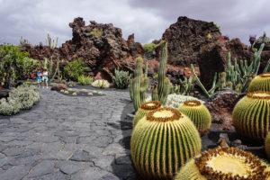 Lanzarote - Kaktusgarten - Nordtour - 02